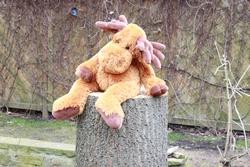 Aua, der Baum musste ab – Erkenntnisse darüber, wer und was im Leben gewinnt.