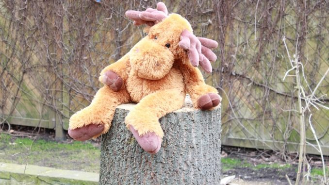 Aua der Baum musste ab