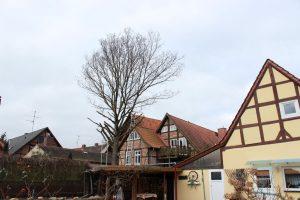Das Baumfällen