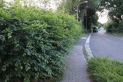 Der Ökoplan des Ortsbürgermeisters von Petershagen – Die Stadt wird naturnah