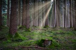 Fehler der Agrarförderung nicht im Wald wiederholen