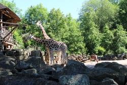 Tiergarten zum großen Teil geöffnet