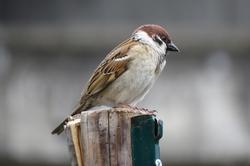 """Vogelzählung """"Stunde der Wintervögel"""" bricht alle Rekorde"""