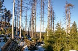 Waldsterben – Klima wirksam schützen und Wald schonender behandeln