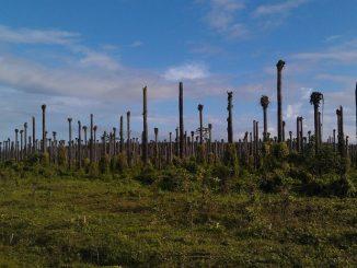 Palmöl-Futtermittel aus entwaldungsfreiem Anbau