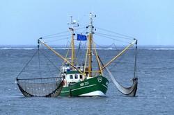 Ostseeschock: Vier wichtige Fischpopulationen für die Fischerei nicht mehr nutzbar